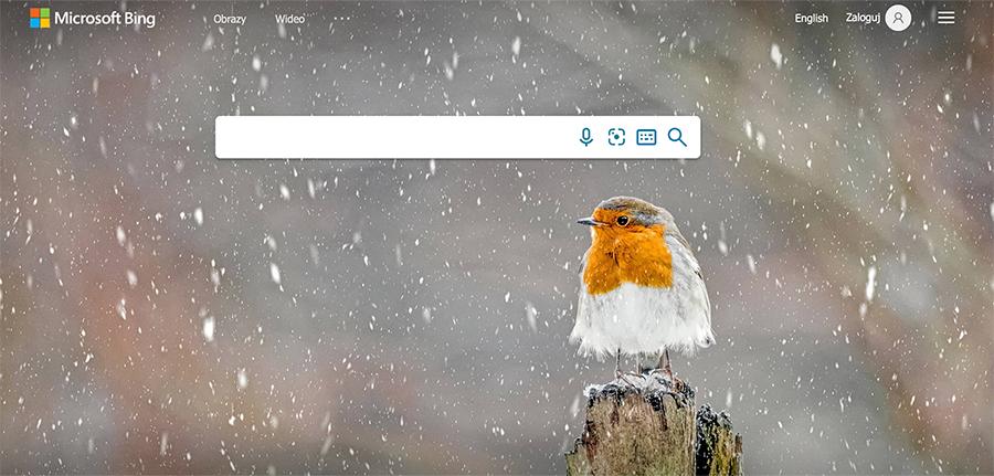 Czy warto reklamować się w Bing Ads lub Yandex Direct?